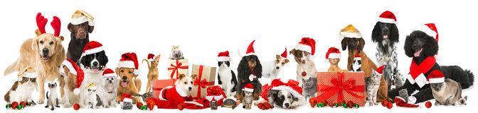 christmas-pets-many-isolated-white-61623916