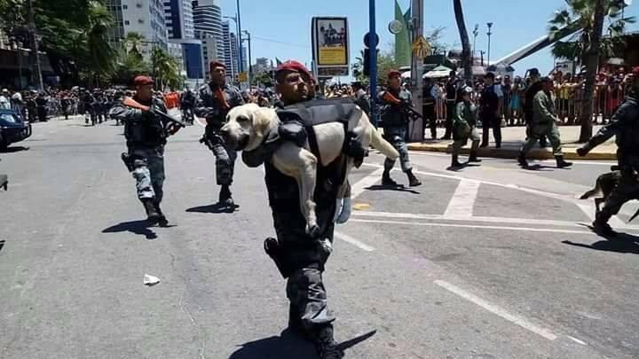 cao-e-carregado-no-colo-por-policial-durante-desfile-de-7-de-setembro-em-fortaleza-pdd1