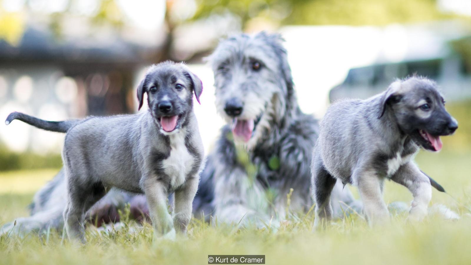Confirmado primeiro nascimento de Cães Gêmeos idênticos na história