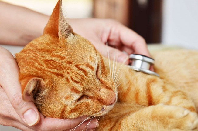 Vet-Organics-3-Cat-First-Aid-Tips-for-Pet-First-Aid-Awareness-Month-iStock-485629407