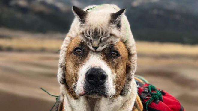 Gato e cachorro viram 'melhores amigos' e fazem viagens juntos