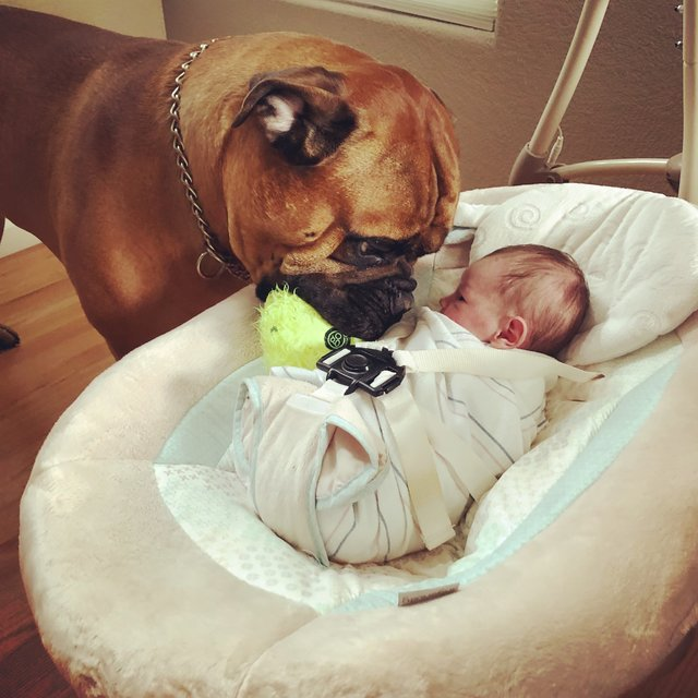 Cãozinho leva seu brinquedo preferido para bebê sempre que escuta o chorando