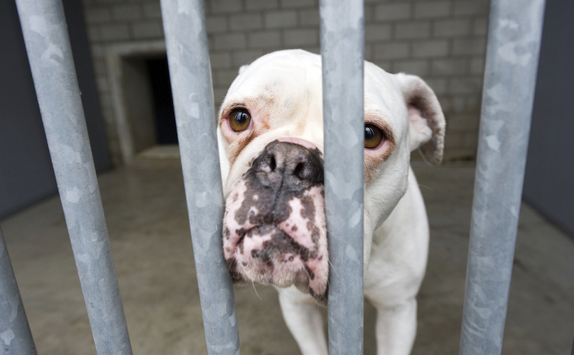 Menina cria projeto para reduzir devolução de cachorros adotados