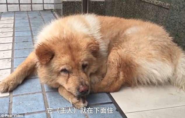 cachorro-passa-12-horas-na-estacao-de-trem-todos-os-dias-esperando-seu-tutor-pdd1