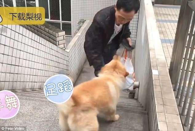 cachorro-passa-12-horas-na-estacao-de-trem-todos-os-dias-esperando-seu-tutor-pdd2