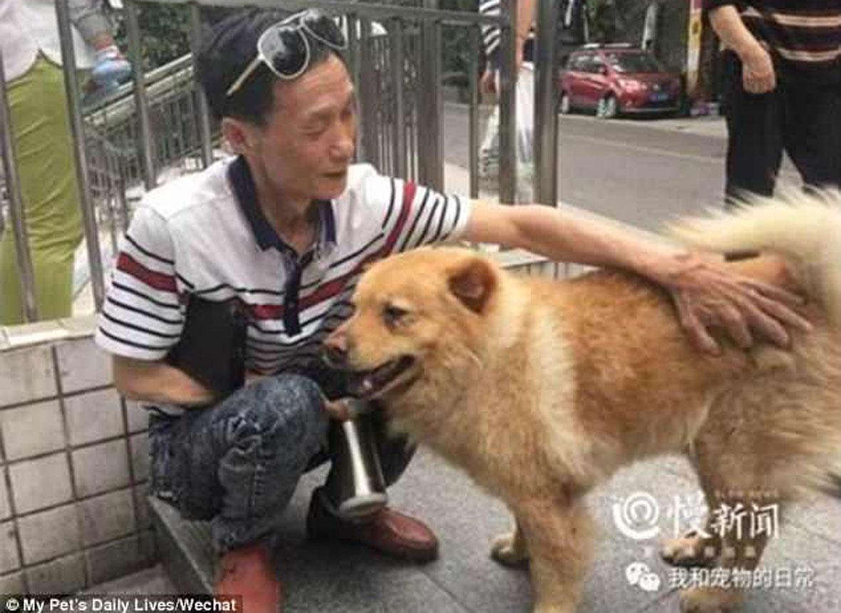 cachorro-passa-12-horas-na-estacao-de-trem-todos-os-dias-esperando-seu-tutor-pdd3
