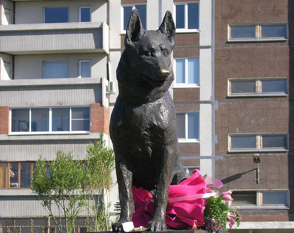 Hachiko russo: Conheça a história de Kostya, o cachorro que esperou por 7 anos seus tutores falecidos