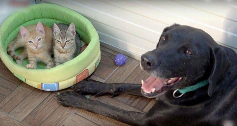Cachorro resgatado retribui o carinho e adota 2 lindos gatinhos