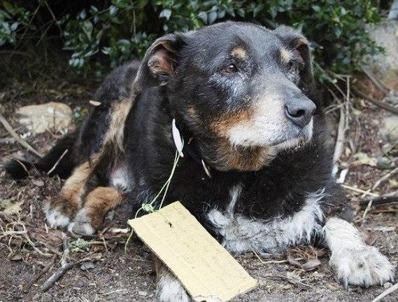 Cachorro some de casa e volta com um recadinho que deixou seus tutores orgulhosos