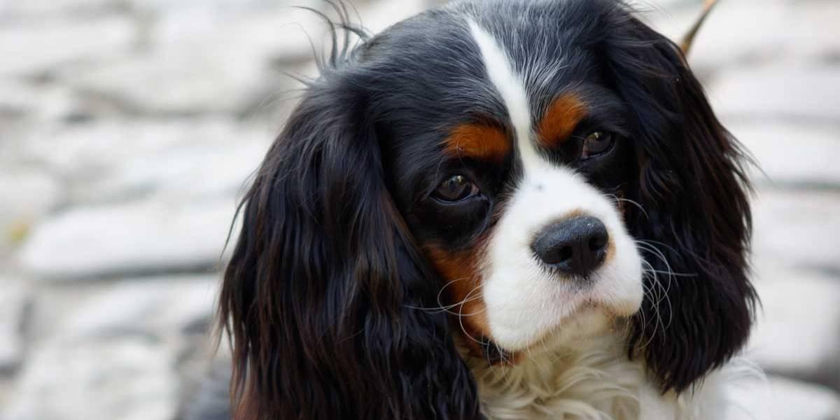 Cão salva vida de bebê engasgado