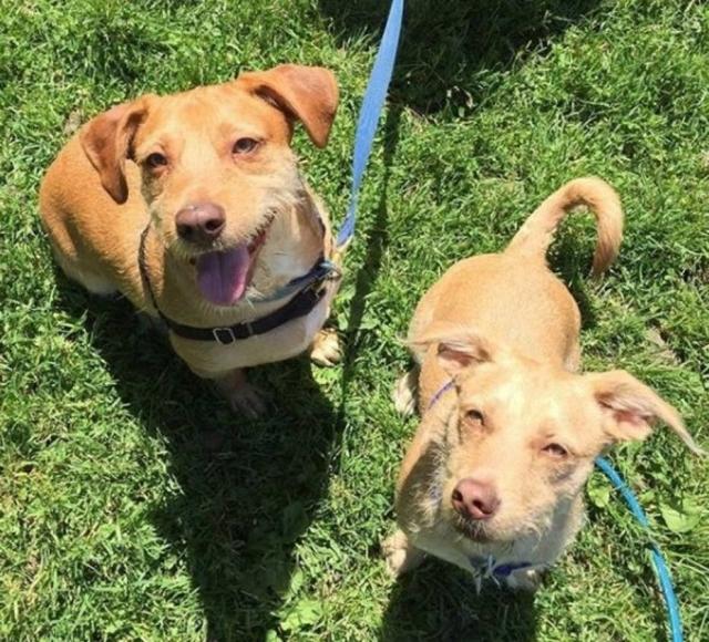Cão encontra 'sósia' na rua e 'convence' tutora a adotá-lo