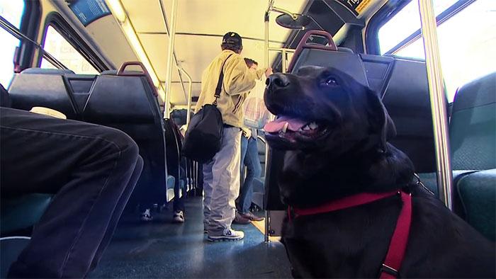 dog-rides-bus-seattle-eclipse-10-5948c8a87f62e__700