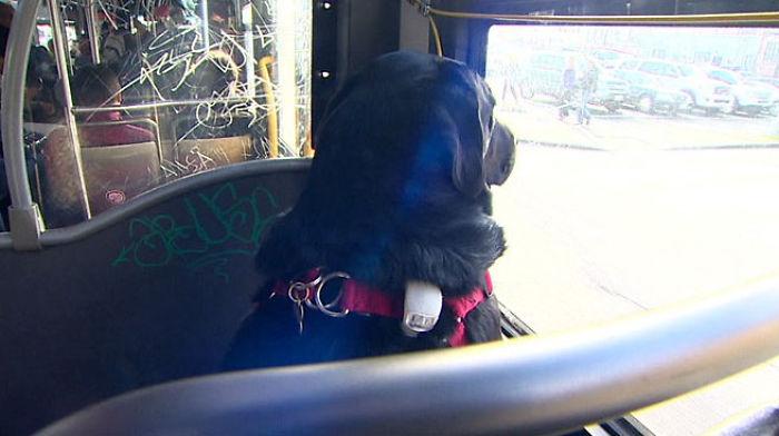 dog-rides-bus-seattle-eclipse-5948d57d296ed__700