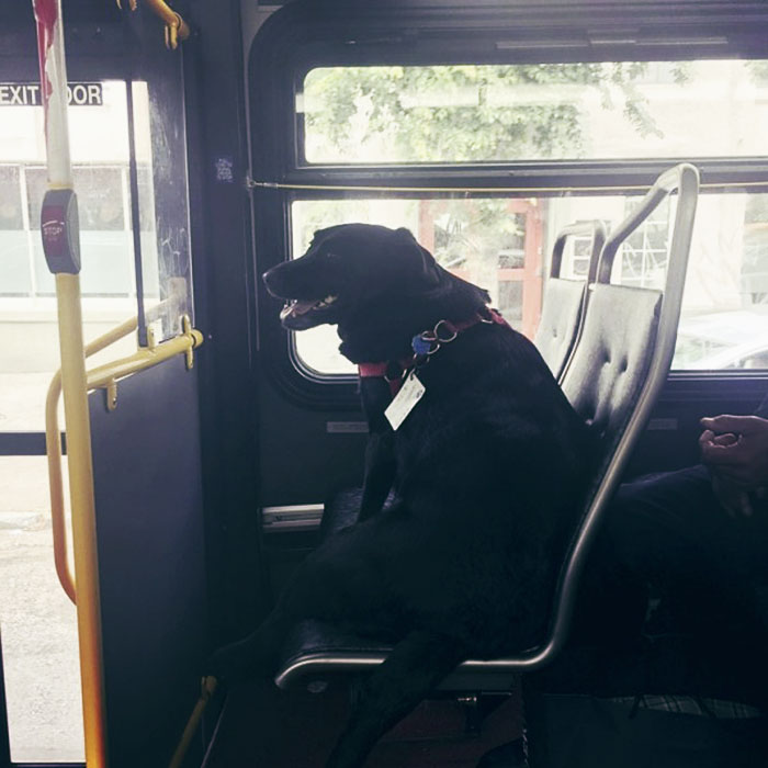dog-rides-bus-seattle-eclipse-5948e1cee5c6f__700