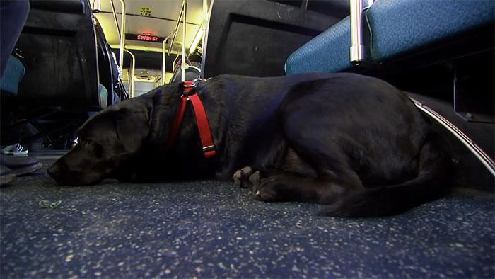 dog-rides-bus-seattle-eclipse-9-5948c8a6797e4__700
