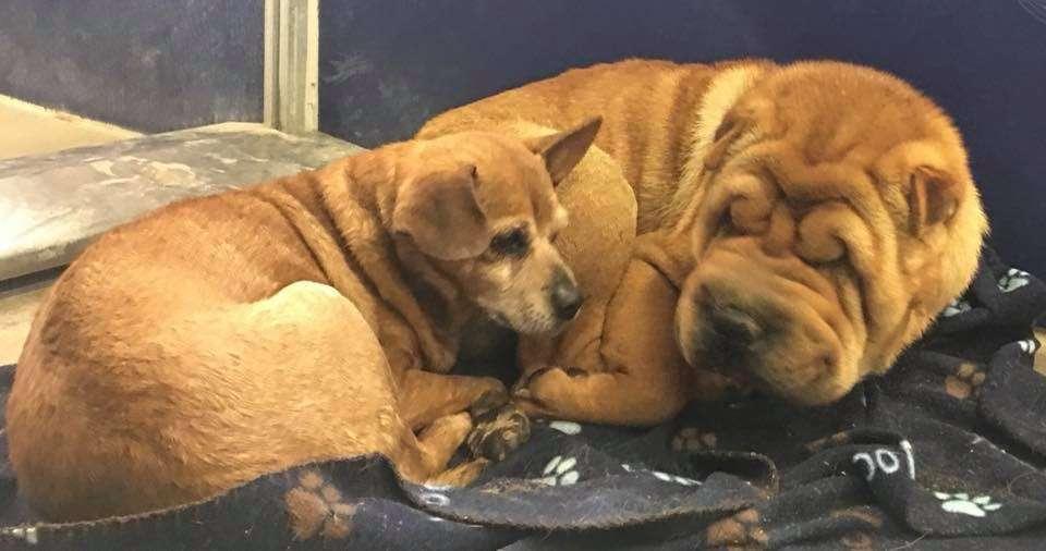Cachorro cego se recusa a ir a qualquer lugar sem o seu melhor amigo