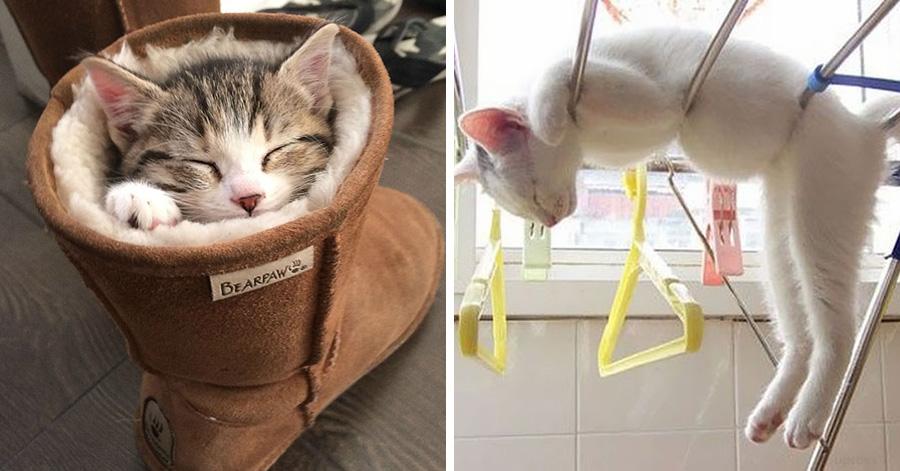 10 fotos que Comprovam que Gatos cochilam em qualquer lugar
