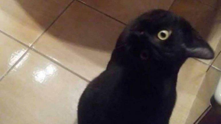 Gato ou Corvo? Essa ilusão de ótica enganou até o algoritmo da Google