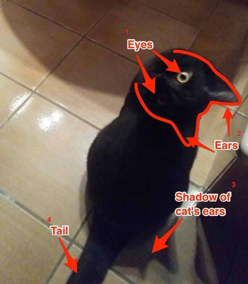 ilusao-otica-gato-corvo-explicação