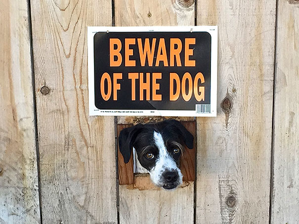 beware-of-the-dog-signs-29-57ee6b29e66c8__605