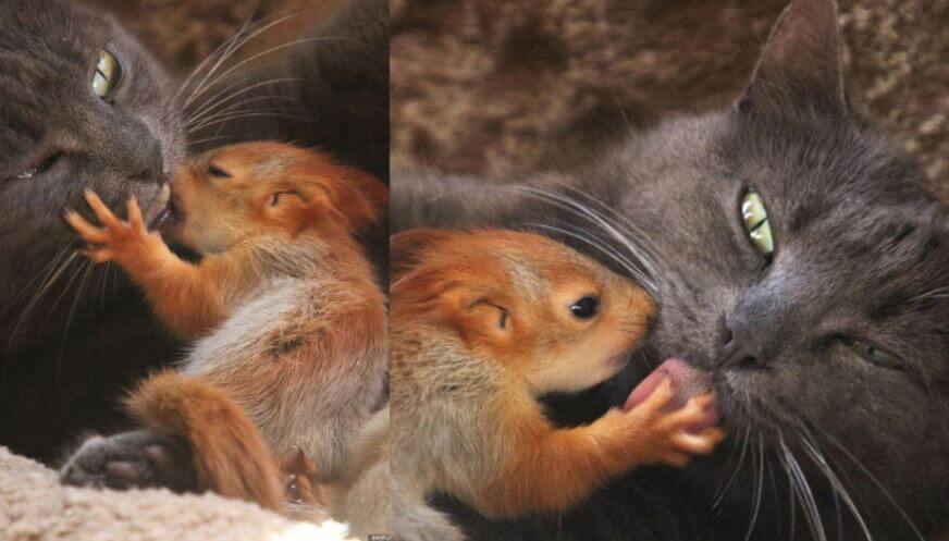 Gatinha adota 4 esquilos órfãos, e as fotos e vídeo são puro amor