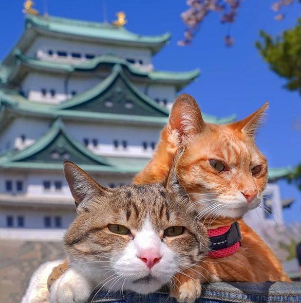 gatos-viajantes-1