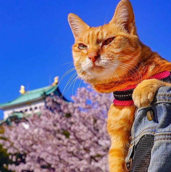 gatos-viajantes-10