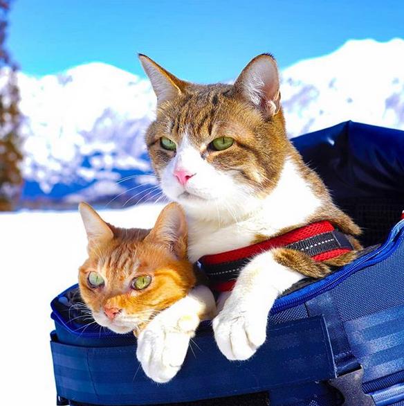 gatos-viajantes-4