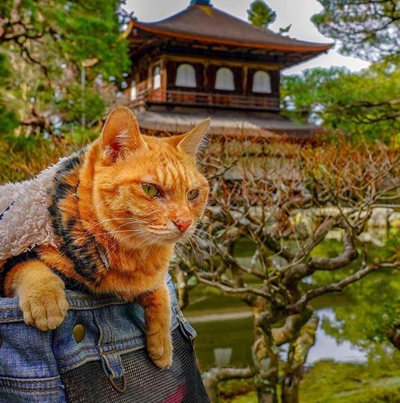 gatos-viajantes-5