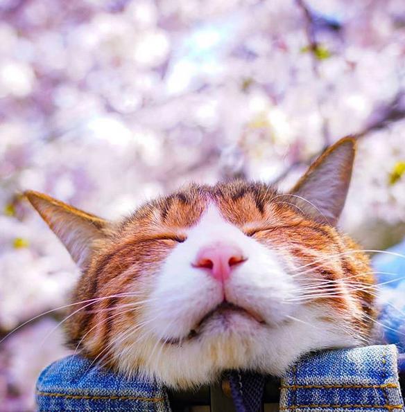 gatos-viajantes-6