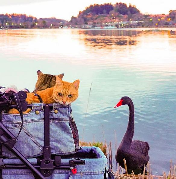 gatos-viajantes-8