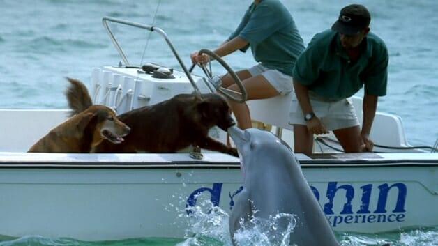 golfinho-beijo-cao-1