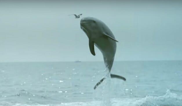 golfinho-beijo-cao-2