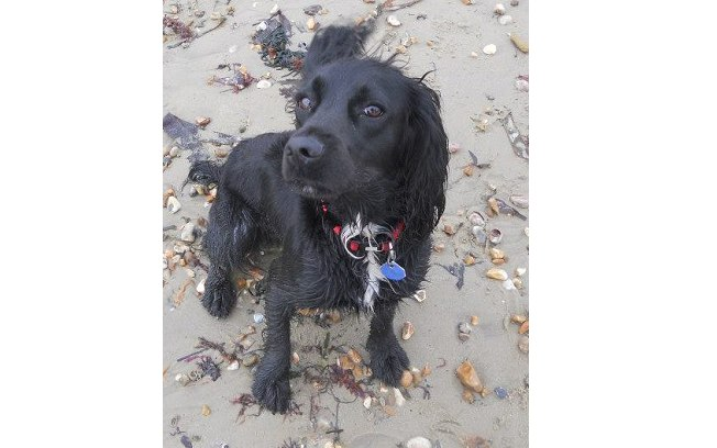 Cadela que foi roubada 6 anos atrás finalmente reencontra sua família
