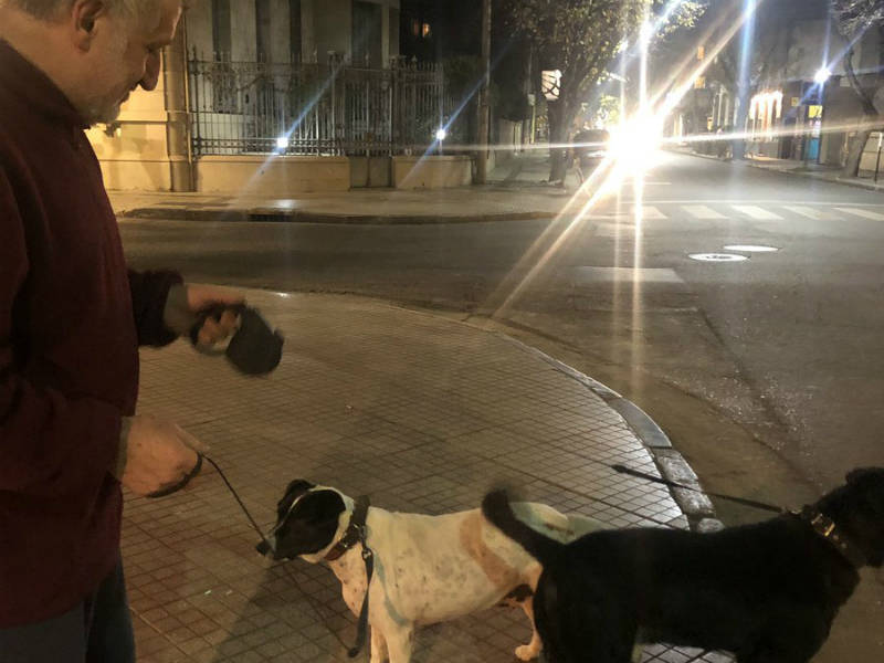 cachorro-grodinho-pidao-02072019210342089