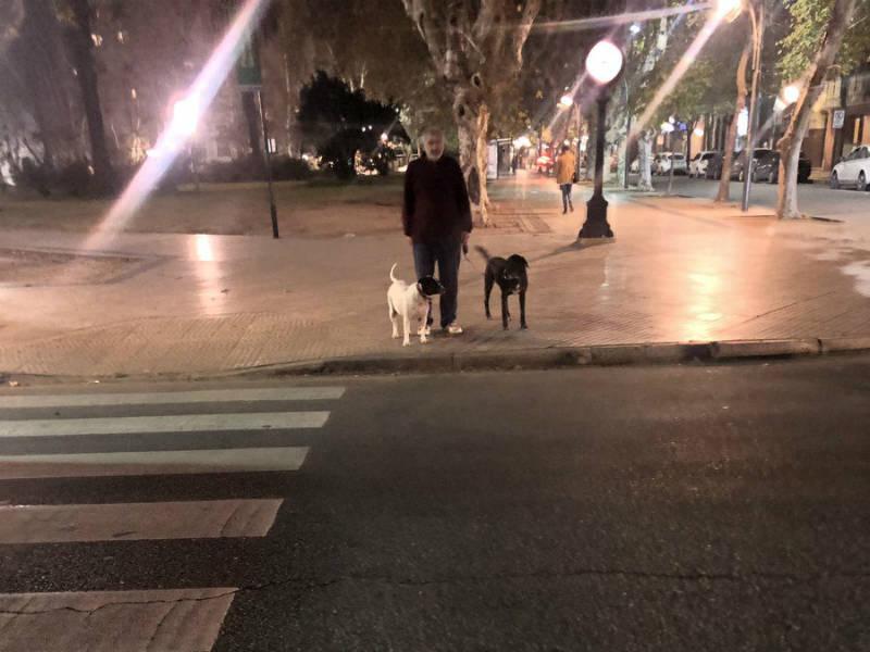 cachorro-grodinho-pidao-02072019210342278