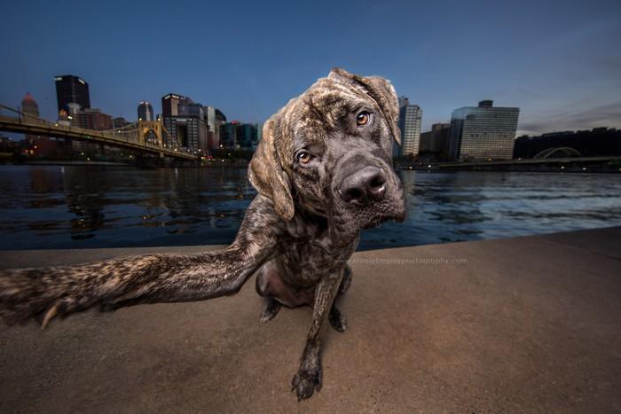 Awebic-Cachorros-tirando-selfie-1
