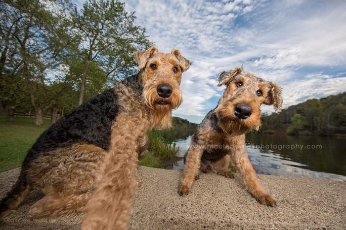 Awebic-Cachorros-tirando-selfie-6