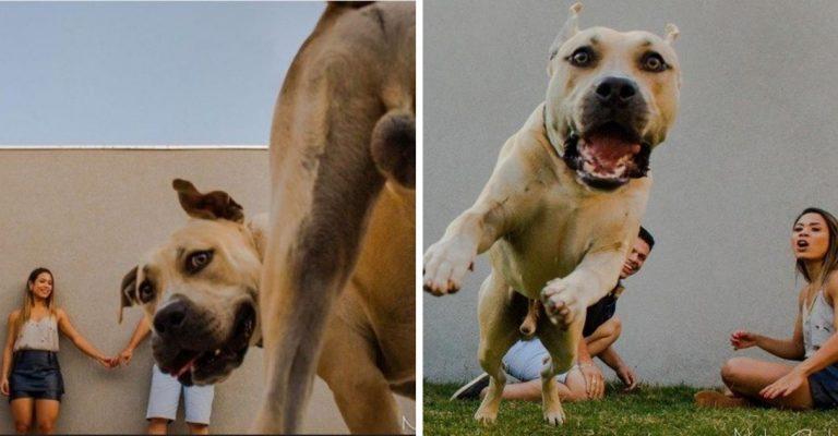 Cãozinho não para quieto durante ensaio fotográfico de noivos e diverte nas fotos