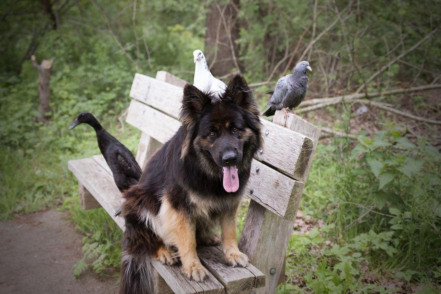 amizade-cachorro-pato12