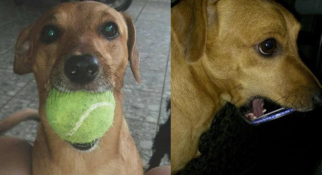 cachorro-presente-familia-18112019143208949