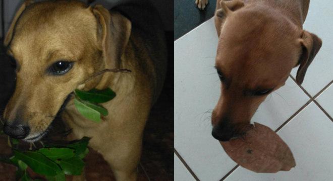cachorro-presente-familia-18112019143209436