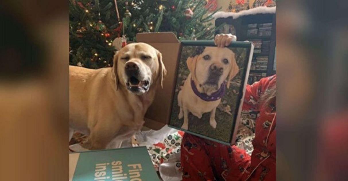 Cachorrinha se apaixona por foto de si mesma: 'Ficou obcecada pelo retrato'