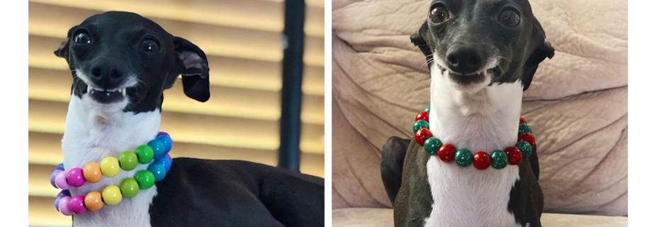 """Cãozinho que está sempre """"sorrindo"""" viraliza nas redes sociais"""