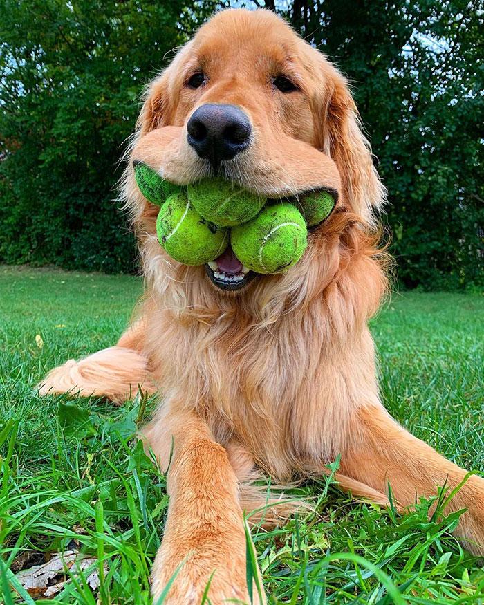 finley-dog-tennis-ball-record-1-5e4403a2935c3__700