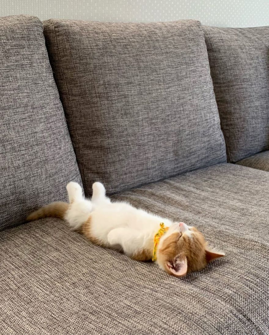 This-cat-that-sleeps-like-a-human-will-be-the-cutest-thing-youll-see-today-5d2d38480f6d2__880