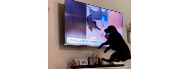 Peludinho tem a melhor reação do mundo ao se ver no noticiário