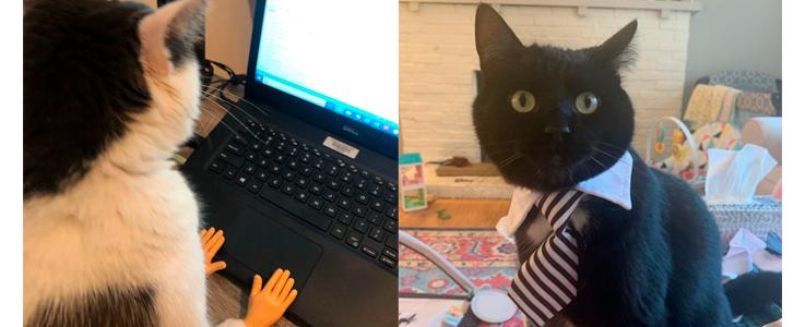 Tutores publicam fotos de 'gatinhos trabalhadores'