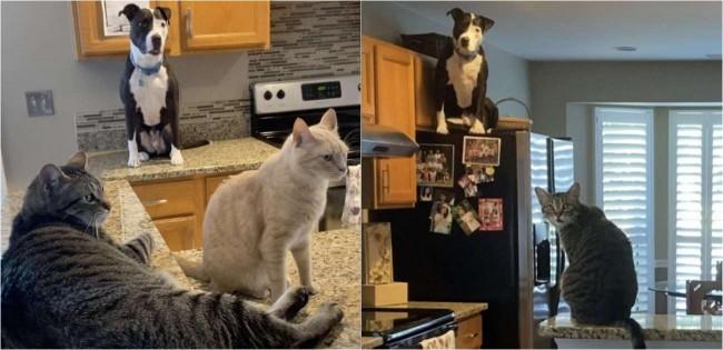 Cãozinho criado junto com gatos adquire mesmo comportamento de felinos e impressiona