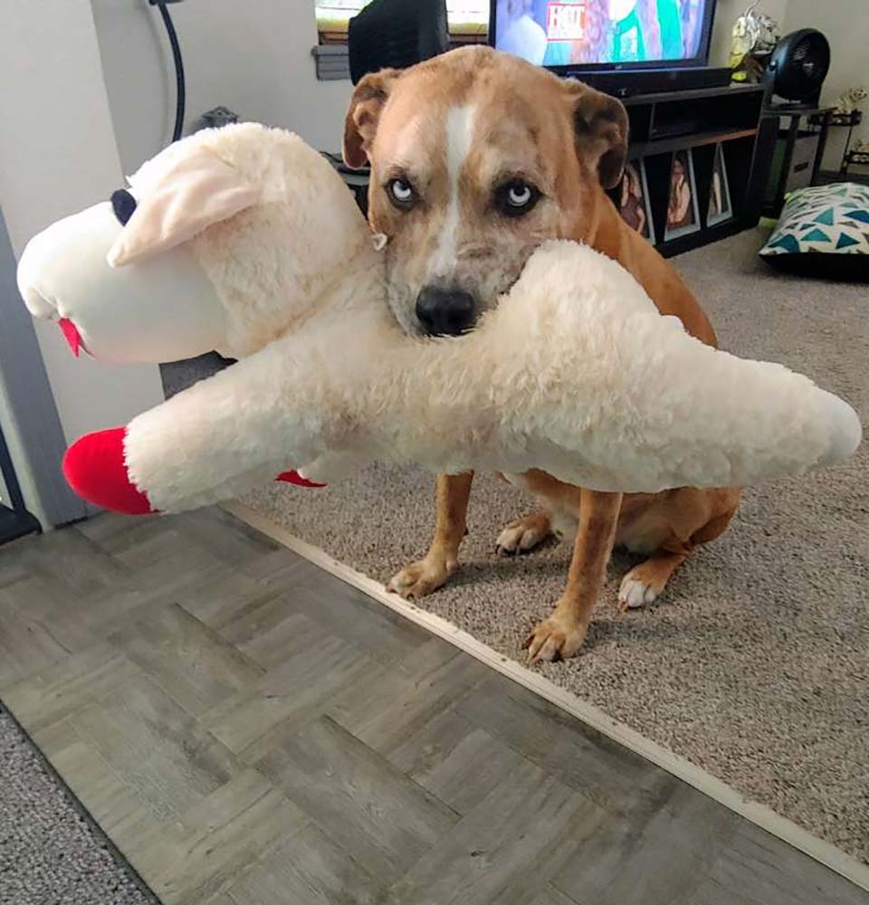 Perro-y-su-juguete